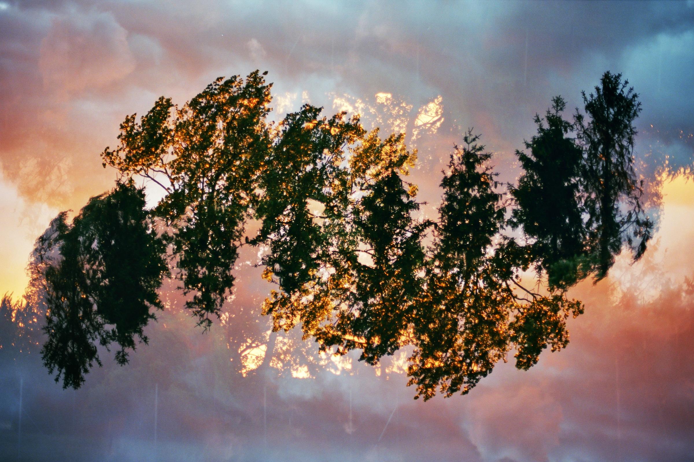 Mehrfachbelichtung von Baumkronen im Sonnenuntergang