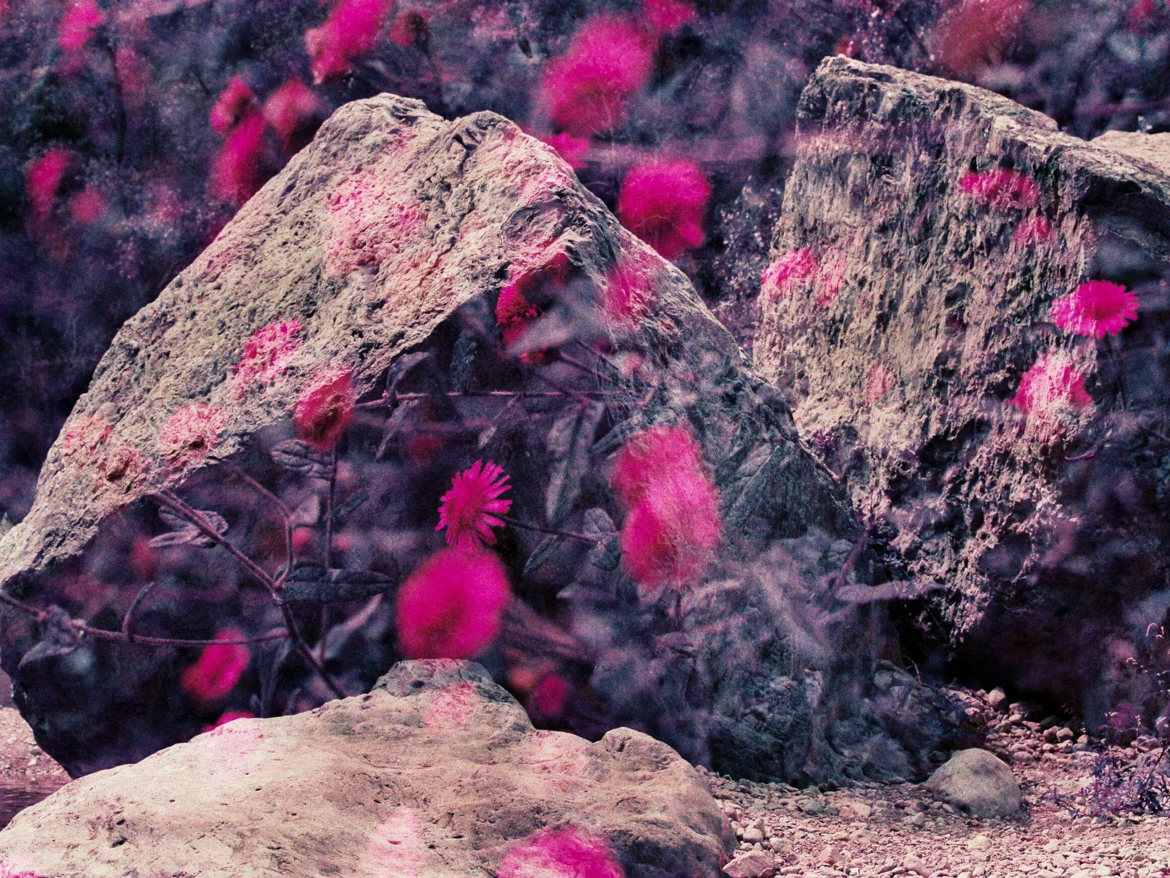 Mehrfachbelichtung von Steinen und Gänseblümchen auf einem Purplechrome Film