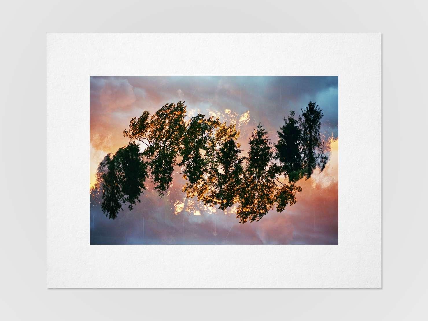Druckansicht: Mehrfachbelichtung von Baumkronen im Sonnenuntergang