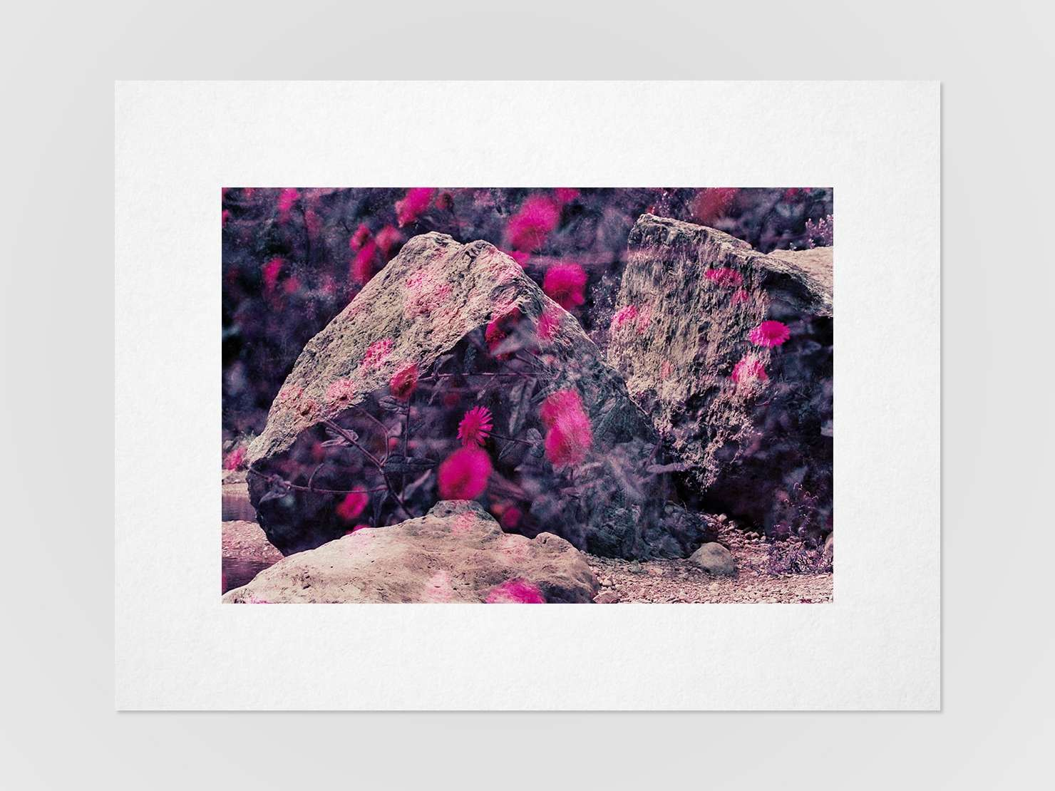 Druckansicht: Mehrfachbelichtung von Steinen und Gänseblümchen auf einem Purplechrome Film