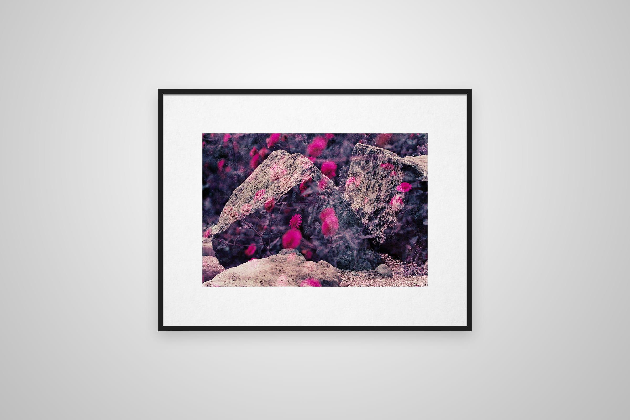 Mehrfachbelichtung von Steinen und Gänseblümchen auf einem Purplechrome Film in einem Rahmen an der Wand